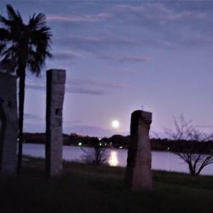 佐鳴湖の夜景