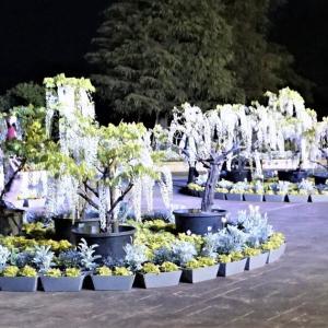 夜の浜松フラワーパーク