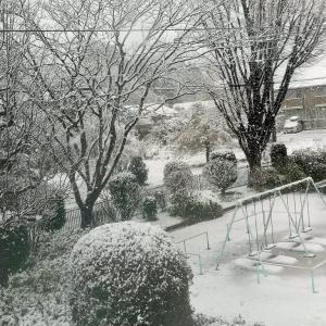 桜の季節の雪