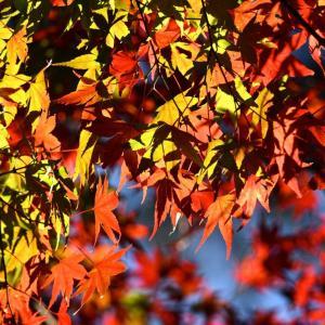 紅葉の景信山〜高尾山縦走 動画UPしました。