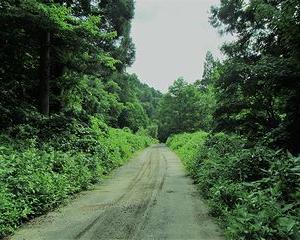 7月 林道を歩いて渓流釣りへ