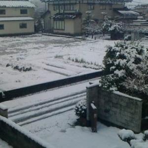 雪らしい雪が、積もりました