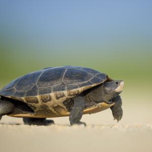 ブログの高速化、遅延について(未解決)