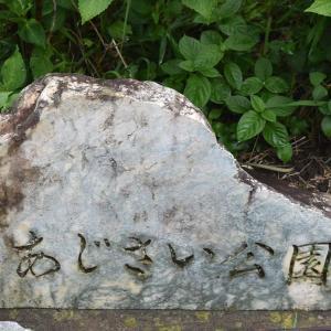 6/30 撮影日記  あじさい公園にて