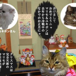 #ブログ更新!「令和2年の元旦の猫達」の様子を更新です。