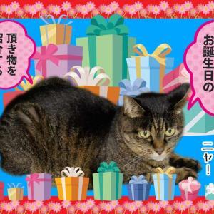 #ブログ更新「マリモちゃんへの頂き物(令和2年9月のお誕生日)を紹介」