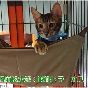 #ブログ更新『新しい猫迎えました!名前は未だ未定・・・ヤンチャそうな男の子』