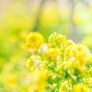 NHK朝ドラ「なつぞら」なつよ、子育ては、なめたらあかん~渡辺麻友の出番かな?天陽くん出番?