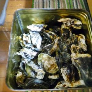 牡蠣祭り♪⌒ヽ(*゚ω゚)ノ