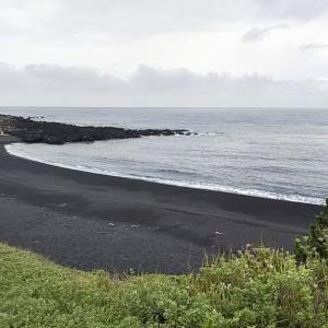 夏の伊豆大島 ハマフエフキ(タマン)