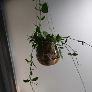 植物と料理の紹介