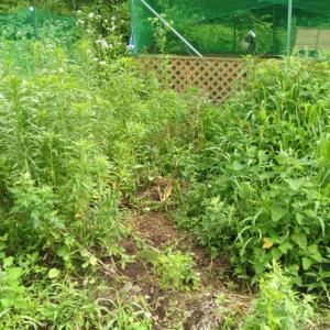 雑草の生え方考察