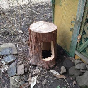 丸太で簡単!鶏の巣箱の作り方