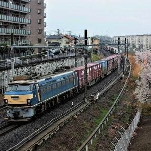 今頃の写真~桜とEF6652号機他