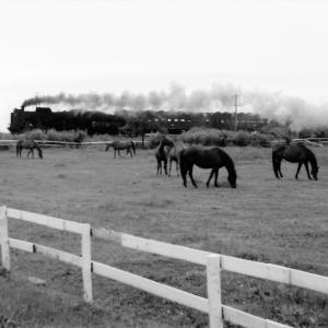昭和50年蒸気機関車D51 社台牧場の放牧馬を入れて
