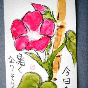 朝顔・紫陽花