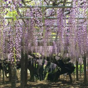 玉敷神社(埼玉県加須市) ~久伊豆神社の総本社と藤祭り~