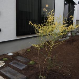 日陰でも楽しめる庭造りスタート