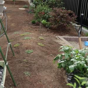 庭のグラウンドカバー計画