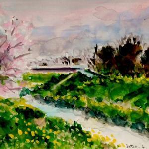 夕暮れの渋田川の桜