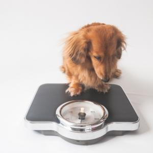 【-10kgに成功】測るだけダイエットって効果ある?