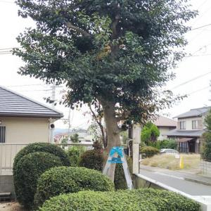 10月26日 家の庭木の剪定