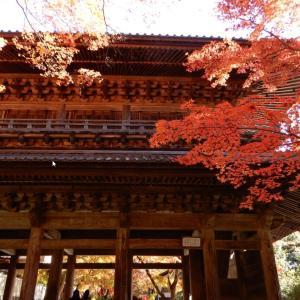 11月23日は 桑名から滋賀県 紅葉の名勝 永源寺へ