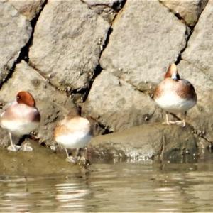 広島市の野鳥観察