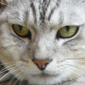 前頭側頭型認知症~猫~