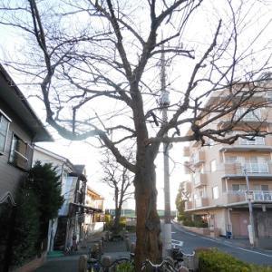 南蔵院と、とげぬき地蔵と ~東京都葛飾区立石の寺院・堂宇