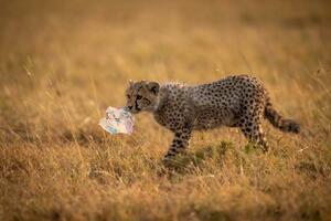 環境汚染プラスチックのお話