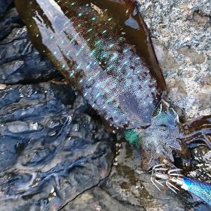 翌朝西海エギング&ヤエン釣り~しっぽくうどん 麺や~中西うどん