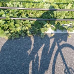 オタクが自転車で日本を旅して思ったこと