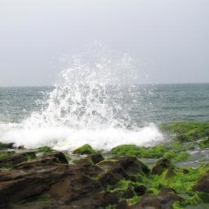 海苔には表裏があるって本当!
