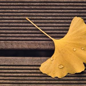 秋の味覚「銀杏」はビタミンが豊富!