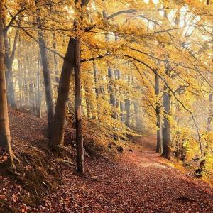 秋はキノコが美味しい! 椎茸の「どんこ」は種類なの?