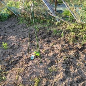 パソコン仕事の合間に野菜の苗を植えました~夏の収穫にむけて~