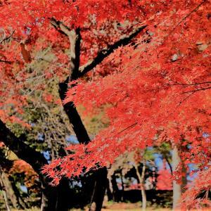 長瀞月の石もみじ公園の紅葉