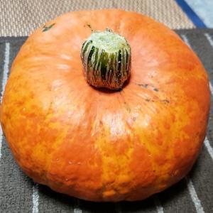 オレンジ色のカボチャ!