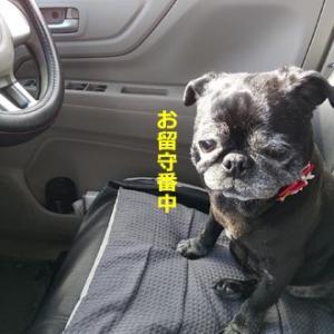 運転席好き