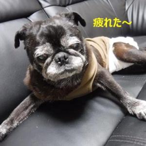岡山に行きました