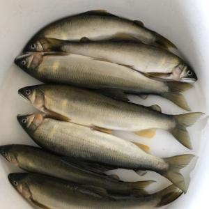 鮎釣りのすすめ