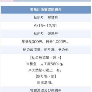 6月15日 今日は佐賀県唐津市の玉島川の解禁です