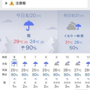 今週は、ずっと雨。⤵︎