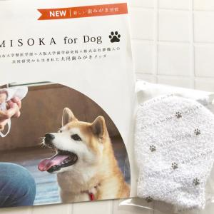 MISOKA for Dogの歯磨き