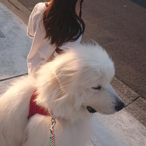 大型犬の餌🐾