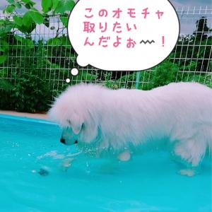 ✨🐶群馬 世界の名犬牧場🐶✨