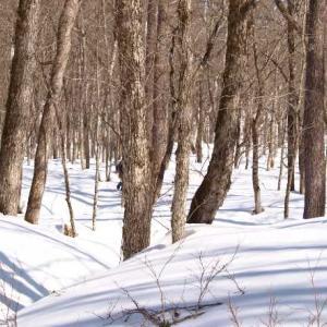 森の中、散歩