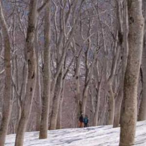 最も美しい森へ・・・