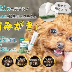 【ドクターワンデル】 愛犬のデンタルケアに☆20秒でできる歯ブラシいらずの歯みがきジェル!